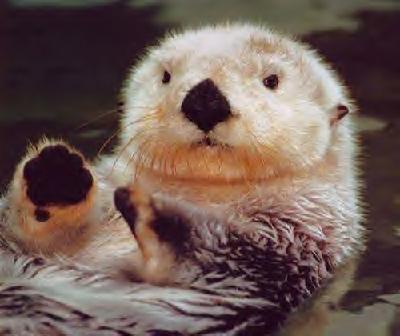 otter-native-american-zodiac