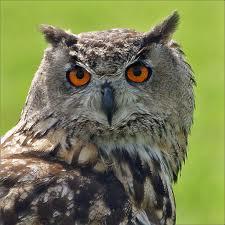 owl-native-american-zodiac