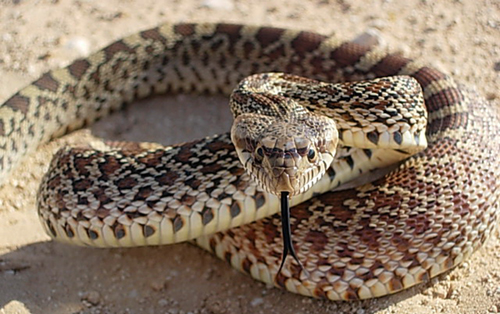 snake-native-american-zodiac