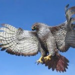 Hawk – Native American Astrology
