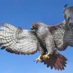 Hawk – Native American Astrology