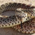 Snake – Native American Astrology